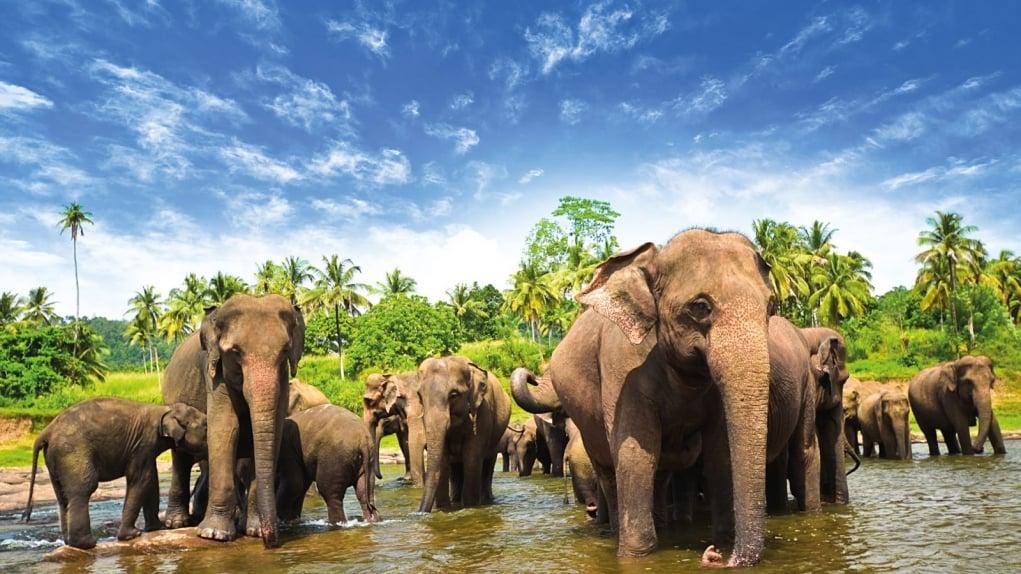 10. Sri Lanka