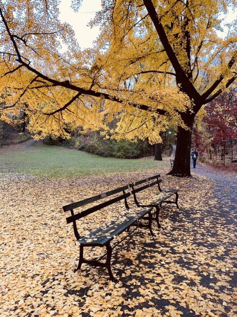 New York'ta kaçırılmaması gereken 15 şey